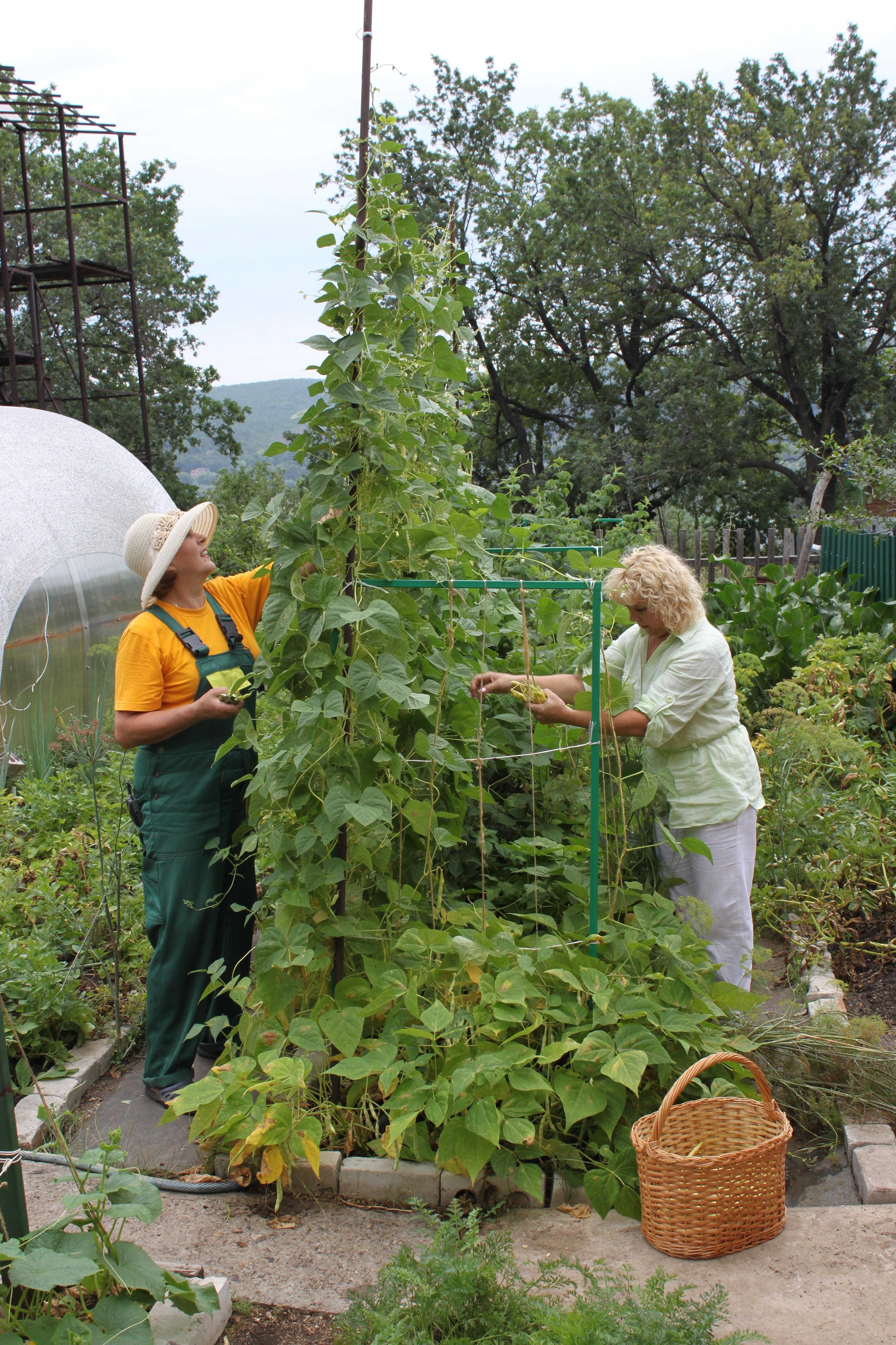 Как из ведра картошки получить десять: советы огородникам 30