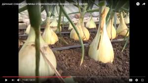 dachnye-sovety-galiny-staroselcevoj-yanvar-2016g-video