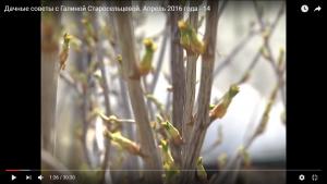 dachnye-sovety-s-galinoj-staroselcevoj-aprel-2016-goda-14