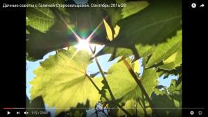 dachnye-sovety-s-galinoj-staroselcevoj-sentyabr-2016-29