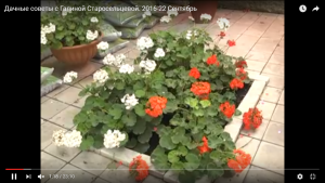 dachnye-sovety-s-galinoj-staroselcevoj-2016-22-sentyabr