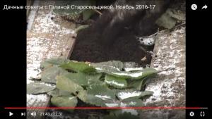 dachnye-sovety-s-galinoj-staroselcevoj-noyabr-2016-17