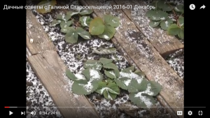dachnye-sovety-s-galinoj-staroselcevoj-2016-01-dekabr