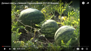 Дачные советы с Галиной Старосельцевой 2017-02 Февраль