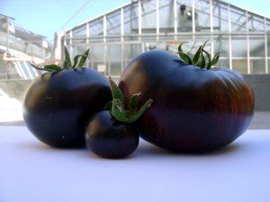 gibridy-tomatov