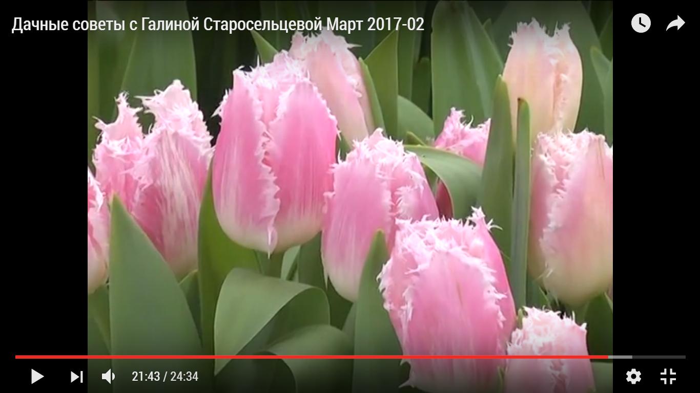 Дачные советы с Галиной Старосельцевой Март 2017-02
