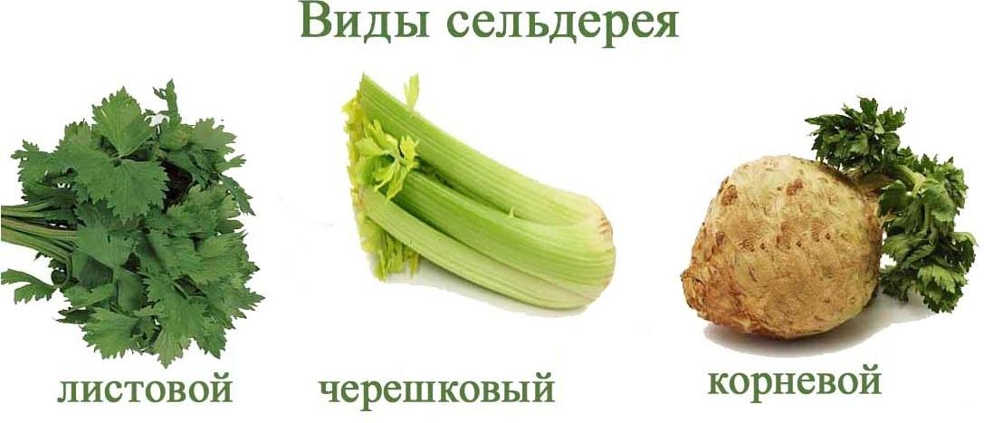 Vidy-seldereya