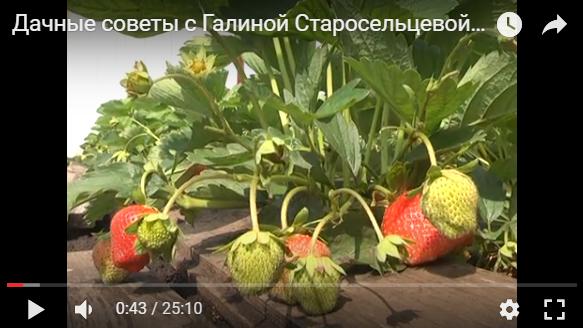 Дачные советы с Галиной Старосельцевой Июль 2017-06