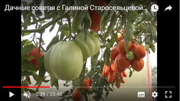 Дачные советы с Галиной Старосельцевой Сентябрь 2017-14