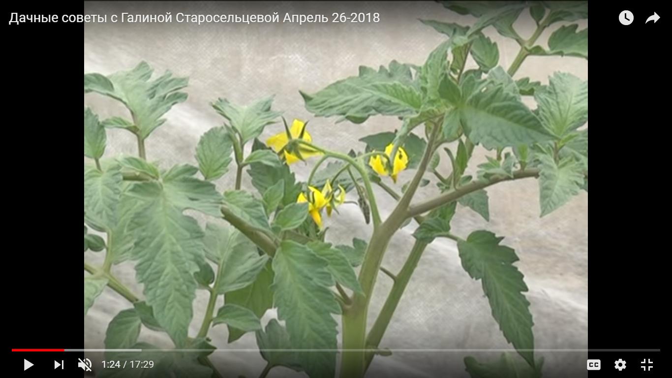 Дачные советы с Галиной Старосельцевой Апрель 2018-26