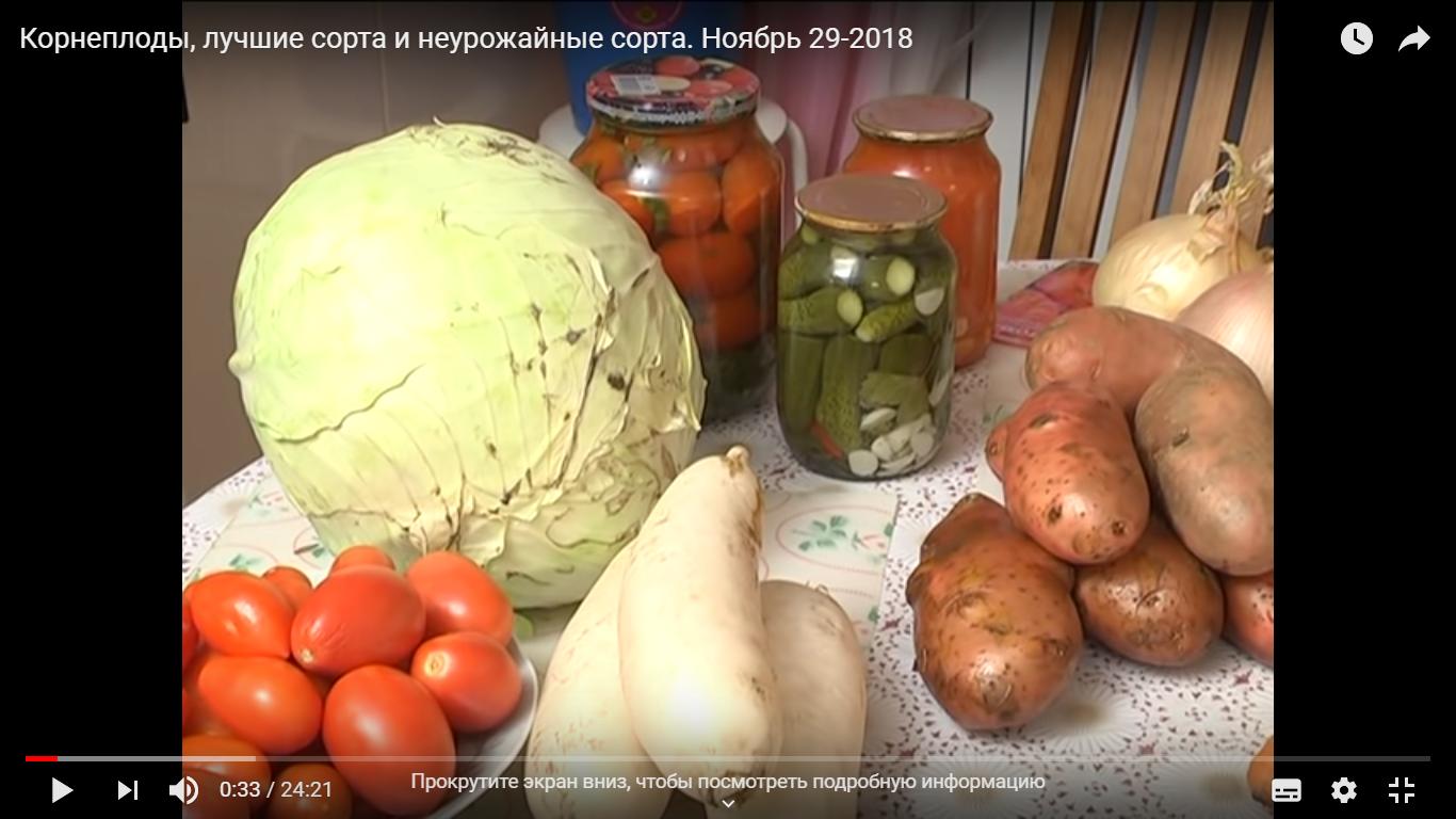 Корнеплоды, лучшие сорта и неурожайные сорта. Ноябрь 29-2018